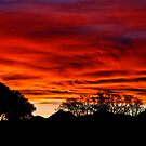 Sky on Fire by Robyn Carter