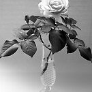 One Rose in B&W by Victoria McGuire