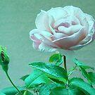 Vintage Rose by Victoria McGuire
