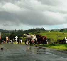 Pony Crossing by Stephie Dickson