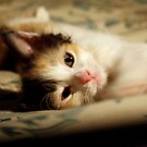 I take over your bed, pwease? by meowiyer
