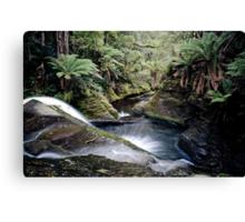 Liffey Falls, Tasmania, Australia Canvas Print