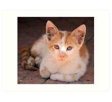 Ginger and white cat 3 Art Print