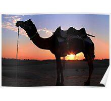 Sunset on the desert. Poster
