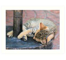 Tabby kitten 12 Art Print