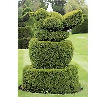 Robin topiary Photographic Print