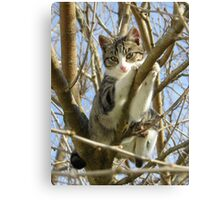 kitty in a tree Canvas Print