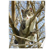 kitty in a tree Poster