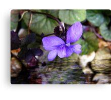 Sweet violets Canvas Print