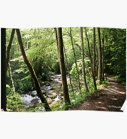 Little River Trail Poster
