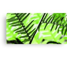 Sweet Fern -Colors and Patterns -- Bridgton,  Maine Canvas Print