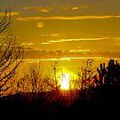 Golden skies by Lee-Anne Wilson