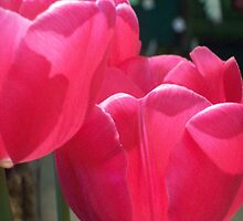 Pink Tulips  by Michelle BarlondSmith
