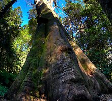 Giant Tree - Mt. Wilson by Bill Fonseca