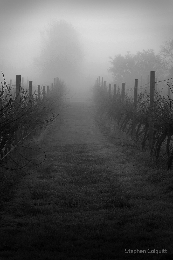 Gloomy wintertime vineyard in fog  by Stephen Colquitt