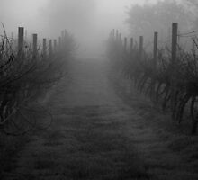 Gloomy wintertime vineyard in fog  by Stephen Colquitt