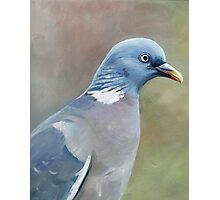 Pigeon Oil Painting Photographic Print