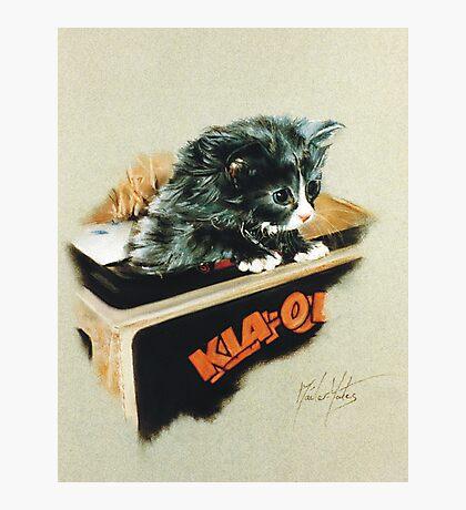 Kia-Ora Kat Photographic Print