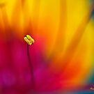Red Bird of Paradise by Ray Chiarello