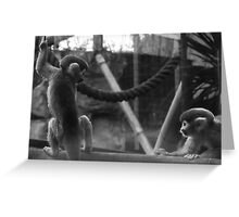 Monkey's playing chase at Colchester Zoo Greeting Card
