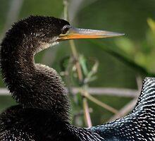Snakebird by kathy s gillentine