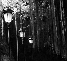 lighted path by mtozier
