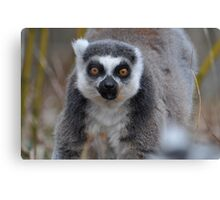 Hey Lemur! Canvas Print