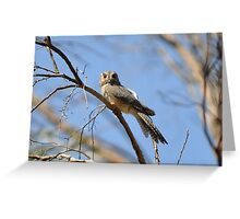 Australian Owlet-Nightjar (Aegotheles cristatus), Painted Canyon, Central Australia Greeting Card