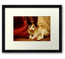 Oh Hai! I'm trying to camouflage with your couch!   Framed Print