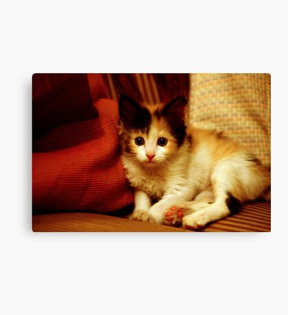 Oh Hai! I'm trying to camouflage with your couch!   Canvas Print