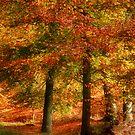 Autumn Glow by Ann Garrett