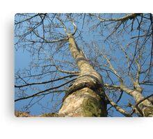 Tree Tower Canvas Print