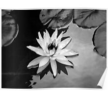 Available - Black and White Interpretation Poster