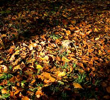 Fallen leaves by Nordlys