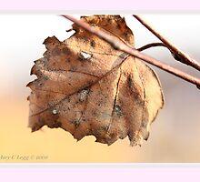 White birch leaf Betula papyrifera B by pogomcl