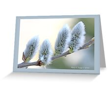Pussywillow blooms Salix  B Greeting Card