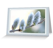 Pussywillow blooms Salix C Greeting Card