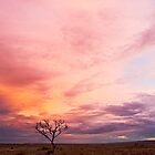 Pink Sky Sunset, Woomera by morealtitude