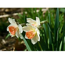 Narcissus Photographic Print