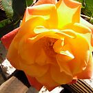 Yellow rose by Shulie1