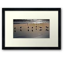 9 Sand Pipers Framed Print