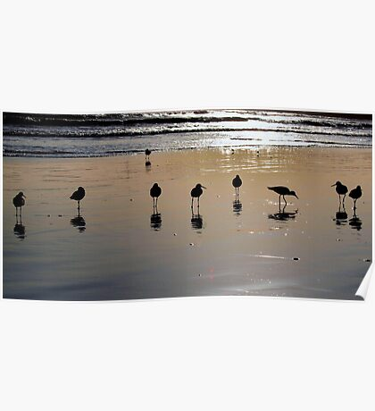 9 Sand Pipers Poster