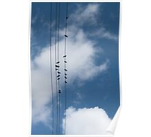 Doves on Overhead Wires Poster