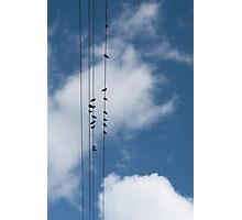 Doves on Overhead Wires Photographic Print
