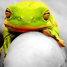 Froggy, Froggy on my finger by CourtneyMichell