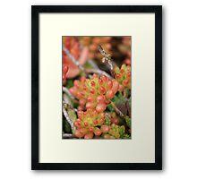 Orange you glad I am water friendly?  Succulent; La Mirada, CA USA Framed Print