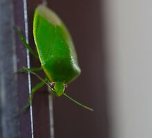 Green bug by rom01