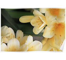 Orchids from Longwood Gardens Poster