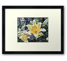 Orchids in Longwood Gardens Framed Print