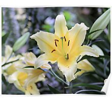 Orchids in Longwood Gardens Poster
